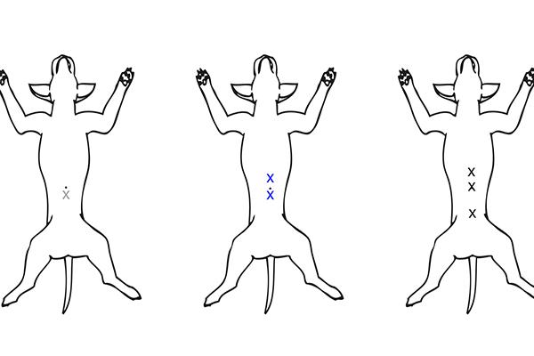"""Dierenkliniek Tiel-Drumpt: Laparoscopisch steriliseren; welke methode? Wij doen de laparoscopische sterilisatie via de """"three portal"""" techniek."""