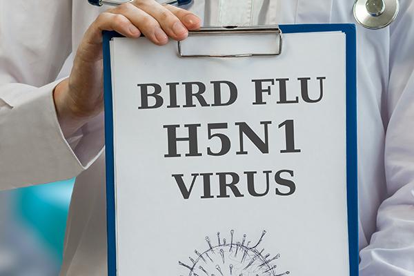 Vogelgriep H5N1