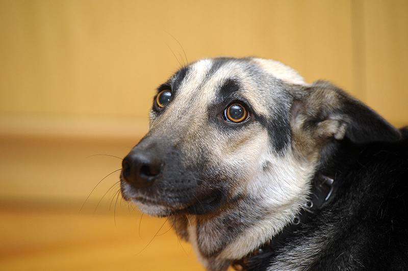Dierenkliniek Tiel-Drumpt: Mijn hond/kat is bang voor vuurwerk, wat nu?