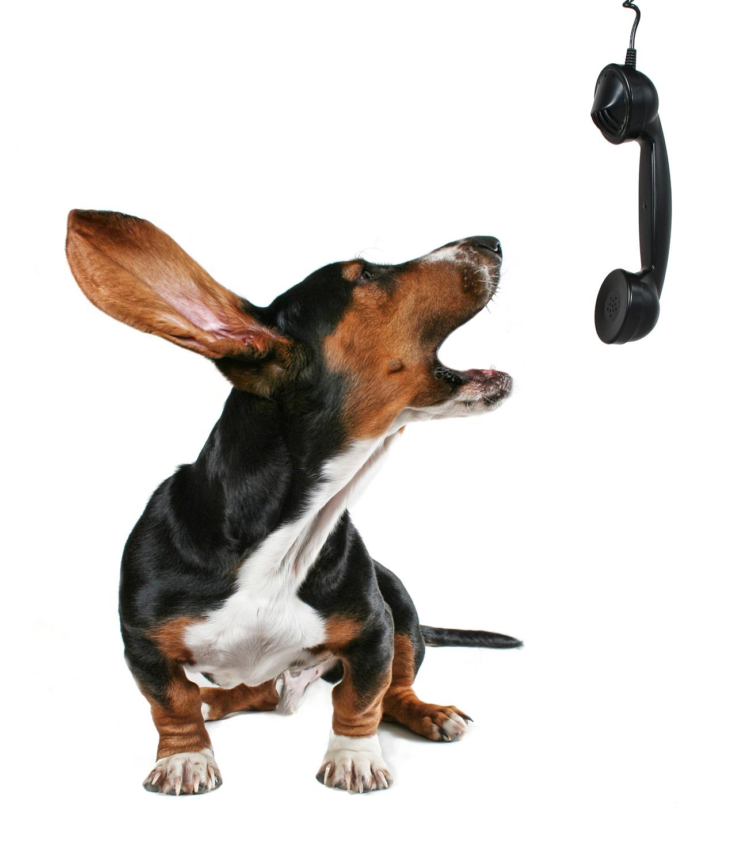 Dierenkliniek Tiel-Drumpt: Mocht u een spoedgeval hebben met uw hond, kat, konijn, fret of ander gezelschapsdier, dan kunt u op onze website terugvinden welke dierenarts er dienst heeft.
