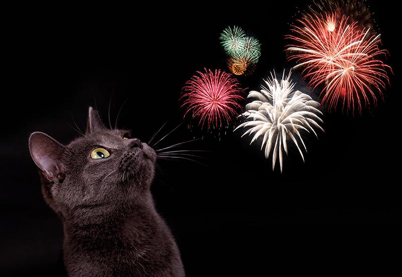 Dierenkliniek Tiel-Drumpt: Mijn kat is niet bang voor vuurwerk.