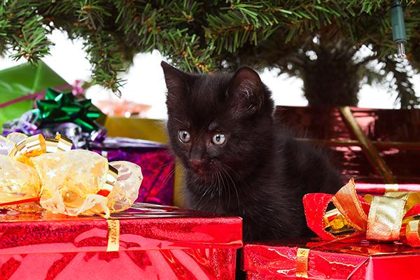 Dierenkliniek Tiel-Drumpt: De gevaren van vergiftiging, van hond en kat, rond kerst & oudjaar: De kerstboom