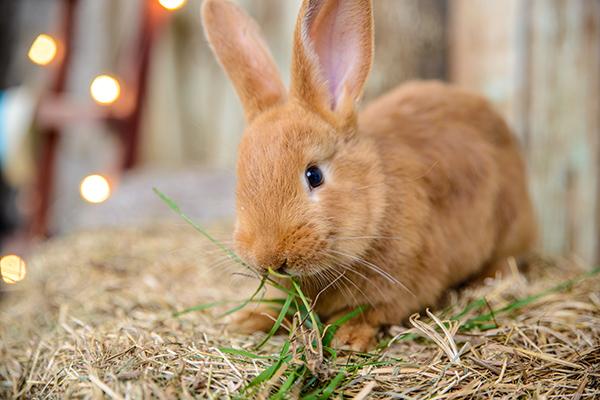 Dierenkliniek Tiel-Drumpt: Wat eet een konijn? Het belangrijkste voor het konijn is voldoende hooi.