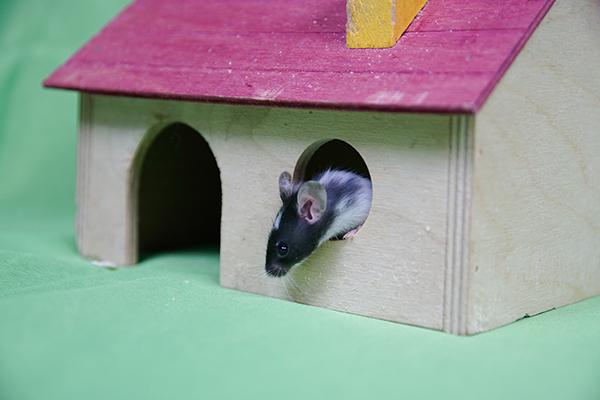 Dierenkliniek Tiel-Drumpt: De huisvesting van muizen kan uitdagender gemaakt worden door er spullen in te zetten.