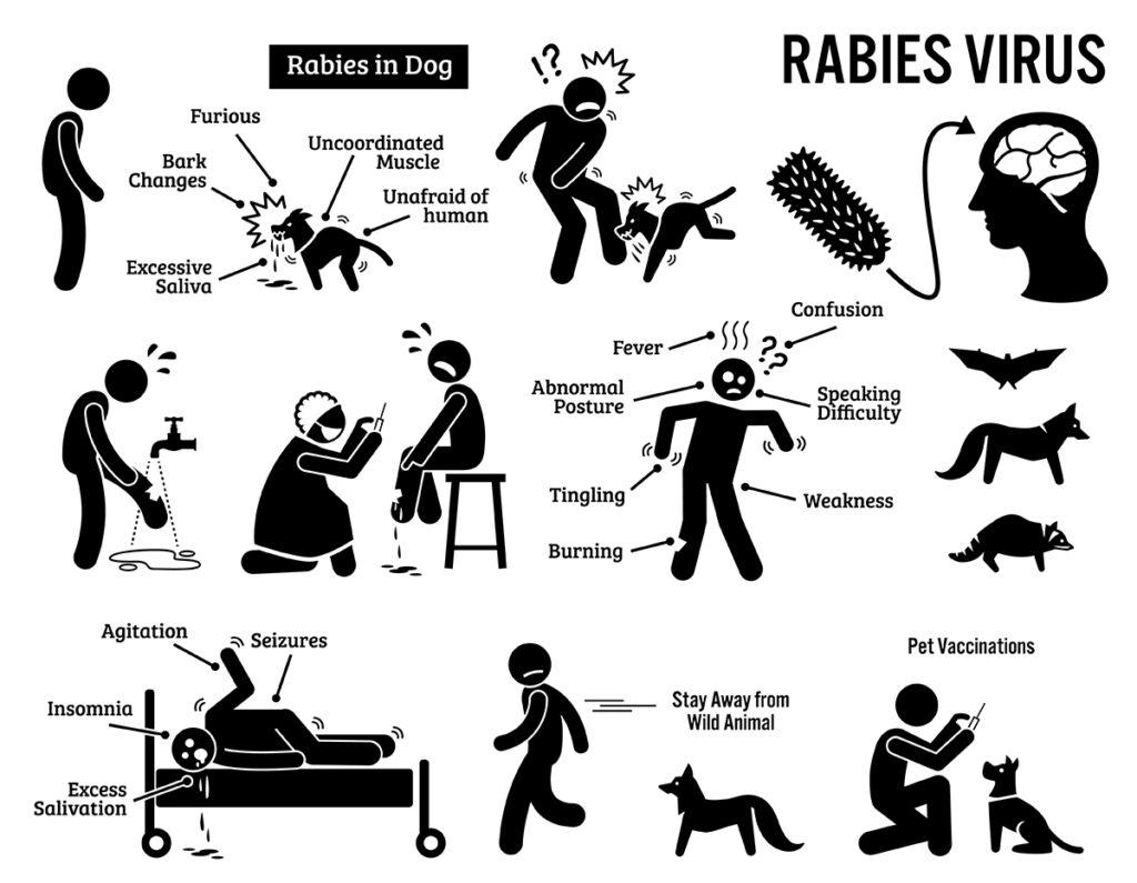 Dierenkliniek Tiel-Drumpt: Hondsdolheid bij de mens.