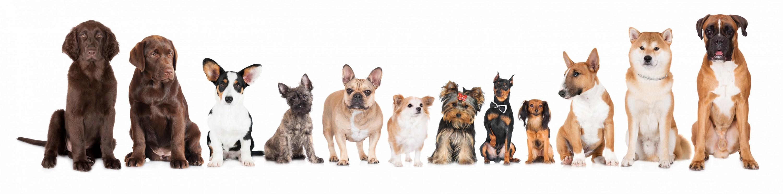 Dierenkliniek Tiel-Drumpt: Groep van rashonden, in 2024 gezonde en sociale rashonden