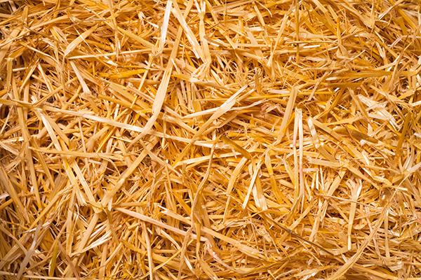 Dierenkliniek Tiel-Drumpt: Wat eet een konijn? Konijnen kunnen wel wat stro eten, maar dit kan ook problemen gaan geven.