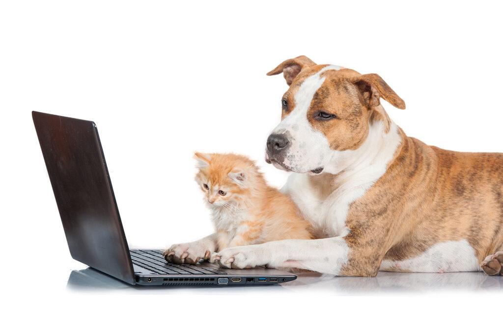 Dierenkliniek Tiel-Drumpt: Onze website is een bron van antwoorden op een verzameling van veel gestelde vragen.