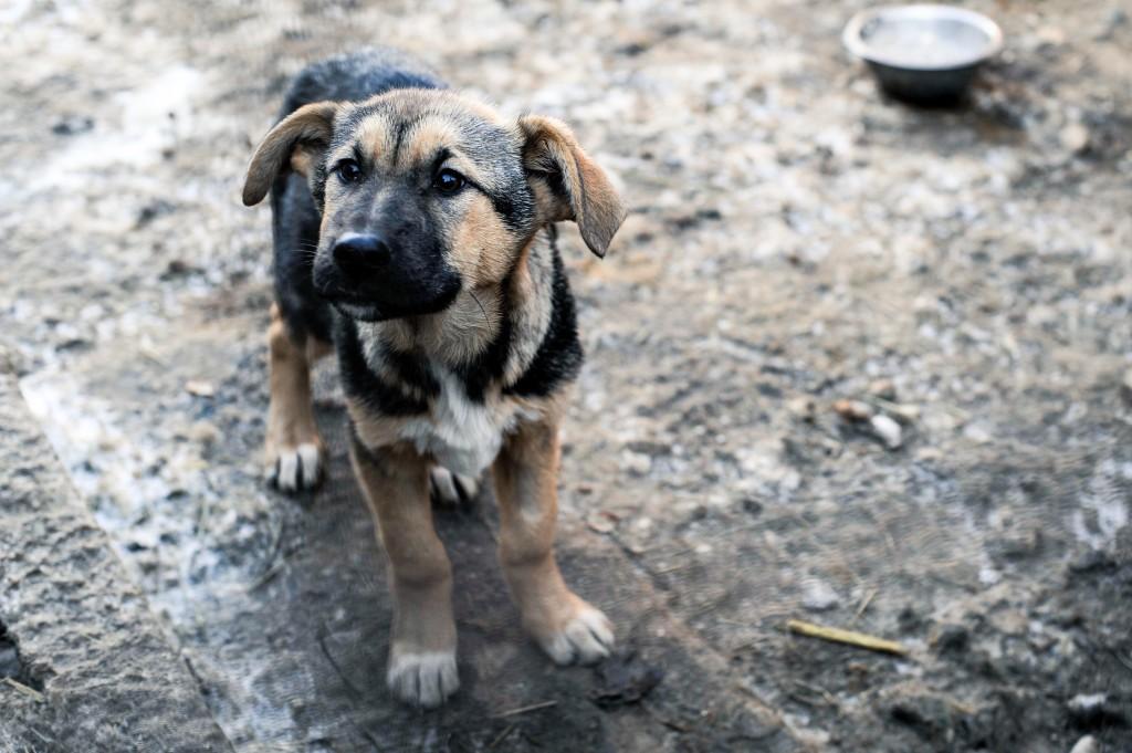 Melkpunt dierenleed. Hier een foto  van een zielig hondje.