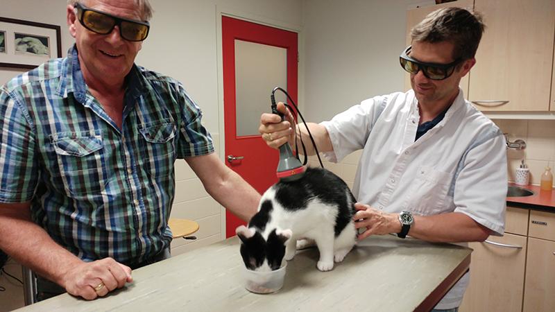 Dierenkliniek Tiel-Drumpt: Katten zijn door hun bewegelijkheid een hele uitdaging bij lasertherapie.