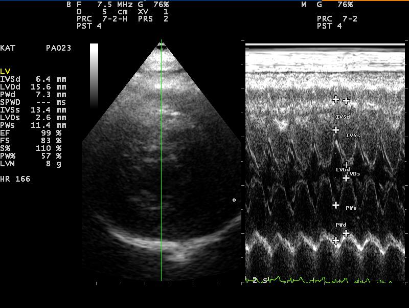 Dierenkliniek Tiel-Drumpt: Verhoogde bloeddruk bij de kat; HCM