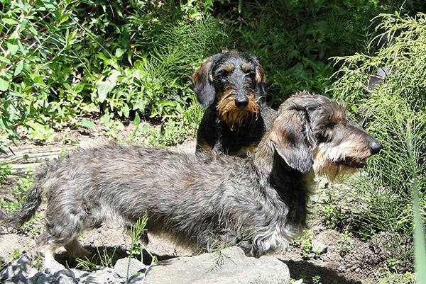 Dierenkliniek Tiel-Drumpt: Hessel en Nina uit Tiel - Passewaaij in het bos.