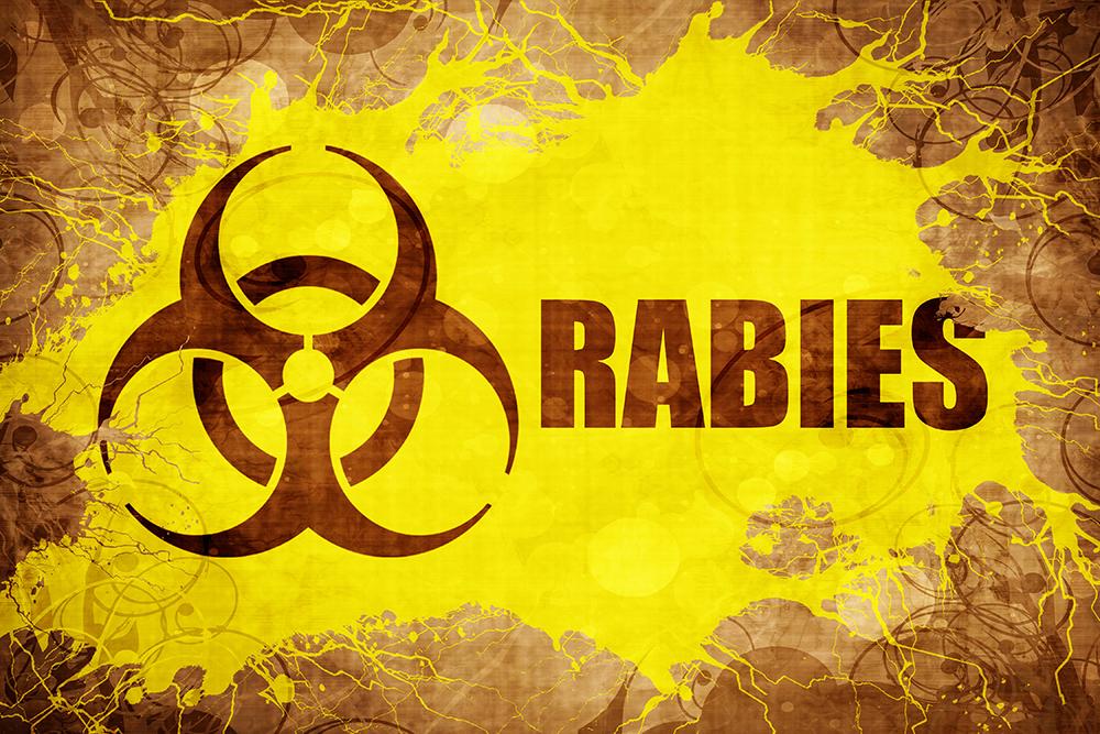 Dierenkliniek Tiel-Drumpt: Rabiës is erg gevaarlijk voor mens, hond, kat en meerdere andere dieren.