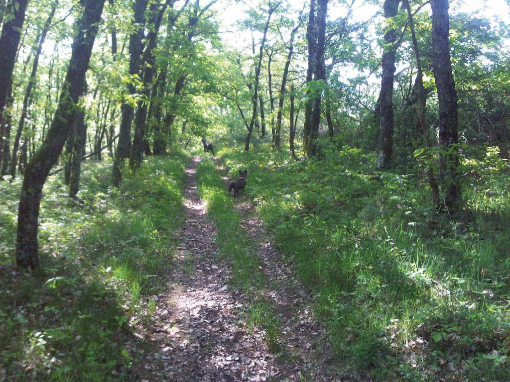 Dierenkliniek Tiel-Drumpt: De Ixodes teek kan onder andere opgelopen worden in het bos. Deze teek kan een overbrenger zijn van de bacterie die ziekte van Lyme veroorzaakt.