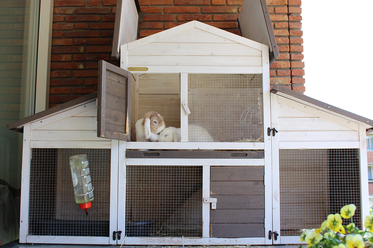 Dierenkliniek Tiel-Drumpt: Konijnenhokken komen voor in vele vormen en maten. Het konijn is een echt gezelschapsdier en heeft verder voldoende ruimte nodig.
