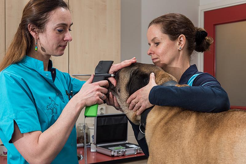 Dierenkliniek Tiel-Drumpt: Met de tonovet een oogdrukmeting doen bij de hond. Dit kan natuurlijk ook bij de kat gedaan worden.
