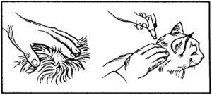Dierenkliniek Tiel-Drumpt: Bijsluiter Profender voor de kat: Hoe aan te brengen.