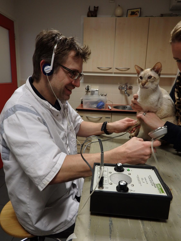 Dierenkliniek Tiel-Drumpt: In onze dierenartspraktijk in Tiel voeren we ook bloeddrukmetingen bij de kat uit.