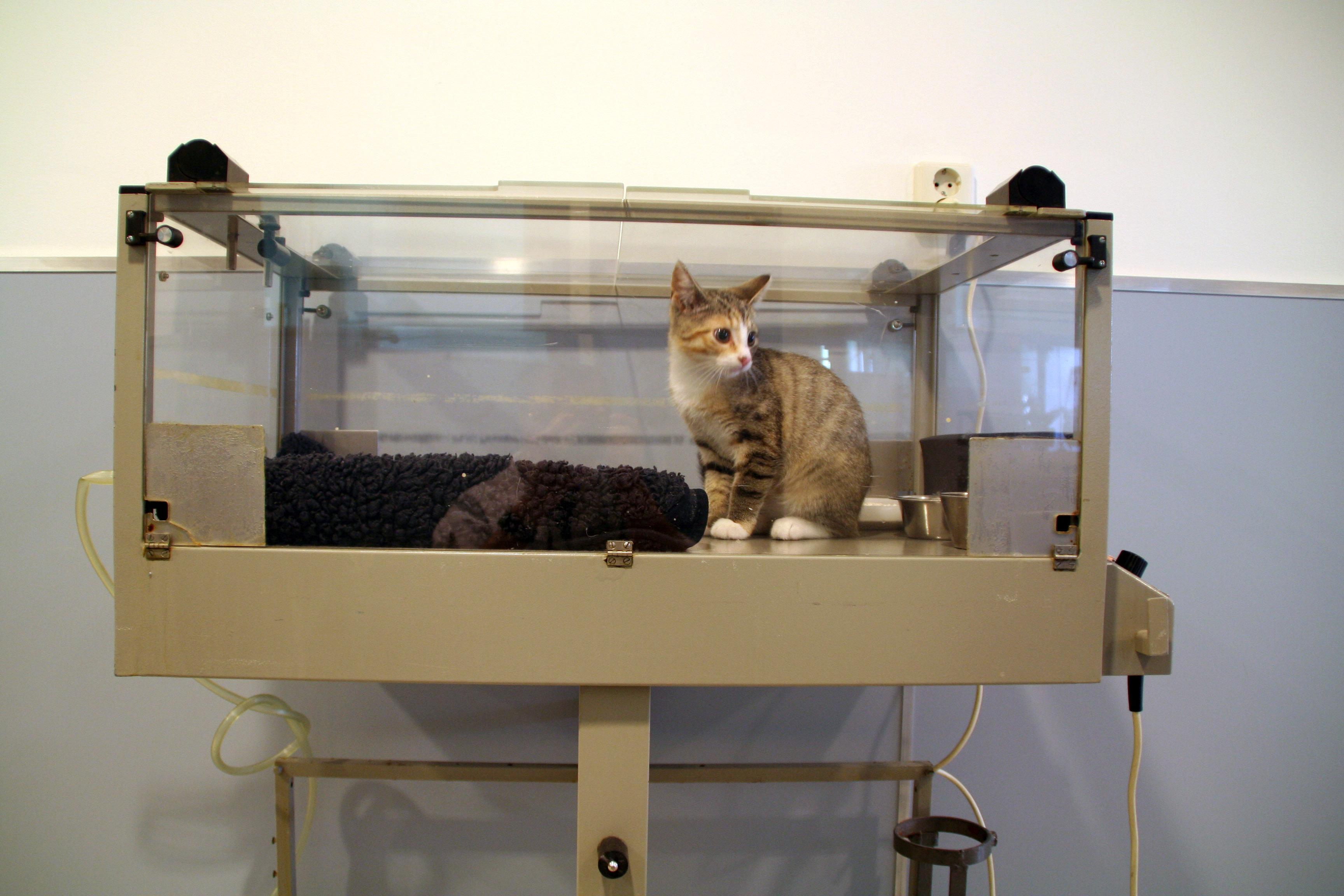 Dierenkliniek Tiel-Drumpt: De couveuse kan gebruikt worden voor pasgeboren pups en kittens. Hij wordt echter ook gebruikt voor zwakke of onderkoelde dieren.