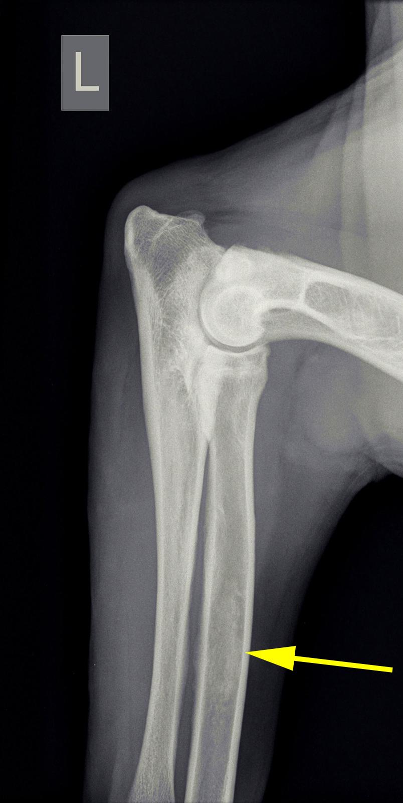 Dierenkliniek Tiel-Drumpt: Op de foto zijn de aanwijzingen voor groeipijn te zien.
