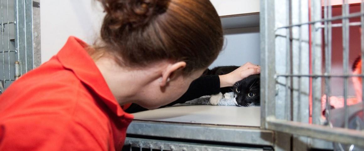 Onze dierenartsassistentes maken regelmatig tijd om onze patiënten te kroelen.