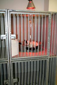 Dierenkliniek Tiel-Drumpt: Warmte lampen helpen onze honden patiëntjes warm te houden.