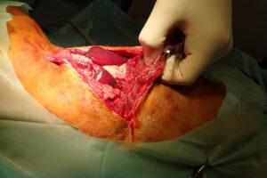 Dierenkliniek Tiel-Drumpt: De gebeten hond: Bij Woody bleek zelfs de buikholte behoorlijk open te liggen.