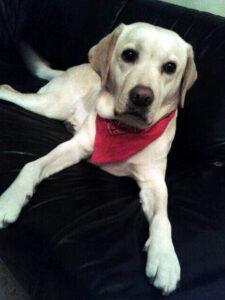 Dierenkliniek Tiel-Drumpt: Jessie, doet het weer goed nu de klaplong hersteld is. Ze is niet meer benauwd.