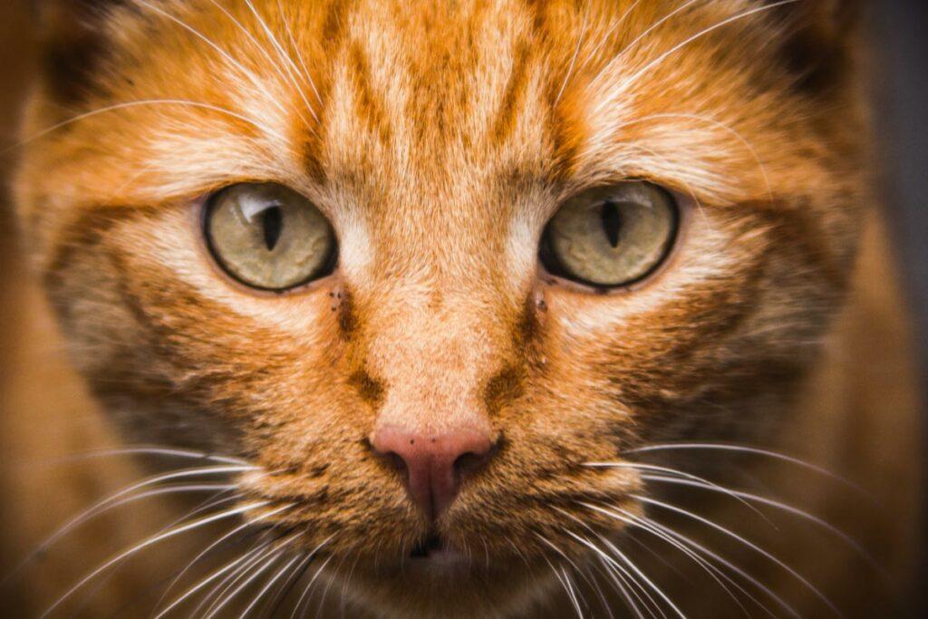 Alle moderne dierenartsen weten dat katten geen kleine honden zijn.