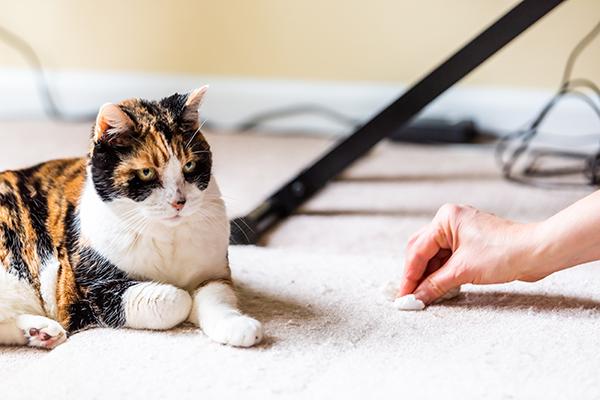 Dierenkliniek Tiel-Drumpt: Waarom plast mijn kat in huis?