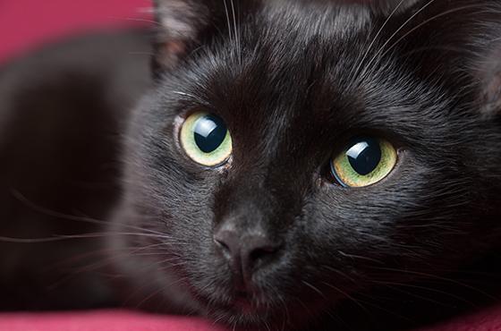 Dierenkliniek Tiel-Drumpt: Onze dierenarts behandeld veel katten.