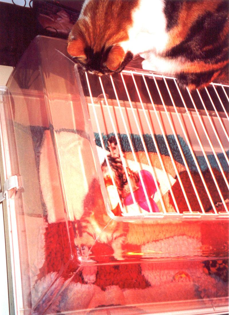 Kitten na verwijderen afgebeten voedingssonde, zwaait naar de kat van de dierenarts.