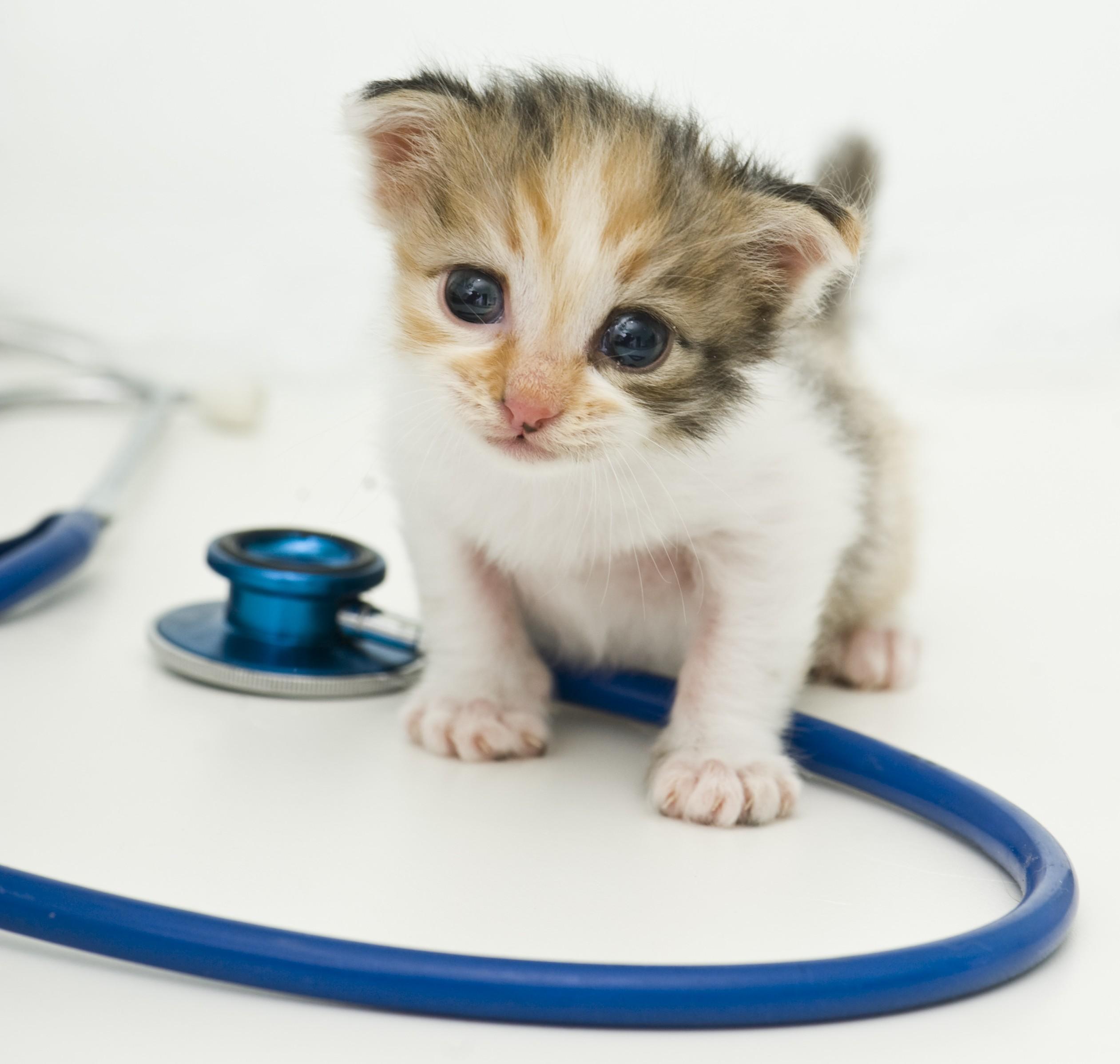 Voor het bepalen welke dierziekten een rol speelt is onderzoek door een dierenarts nodig.