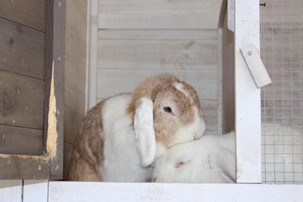 Het koppelen van konijnen dierenkliniek tiel drumpt - Een hok ...