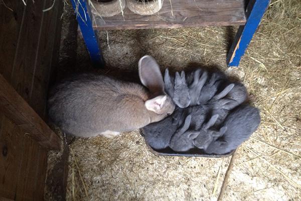 Dierenkliniek Tiel-Drumpt: Konijnen zien de dierenartsen van Dierenkliniek Tiel-Drumpt in allerlei soorten en maten. En ze moeten allemaal beschermd worden tegen onder andere de VHD2. Daarom hebben we de konijnen-entmiddagen weer in het leven geroepen.