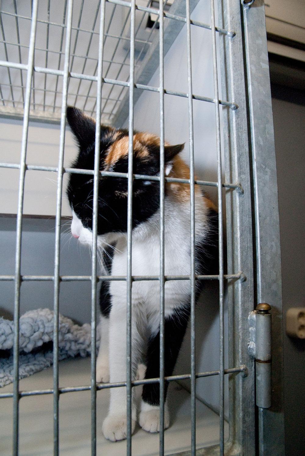 Dierenkliniek Tiel-Drumpt: Het is niet alleen maar stress in de kattenopname.