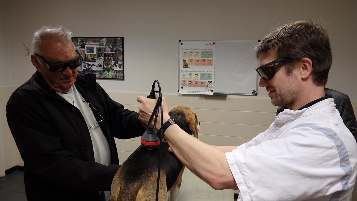 Dierenkliniek Tiel-Drumpt: Met behulp van de klasse IV laser is er nu de mogelijkheid van een laserbehandeling of hele lasertherapie bij honden, katten, konijnen, cavia's, fretten en vele andere diersoorten.