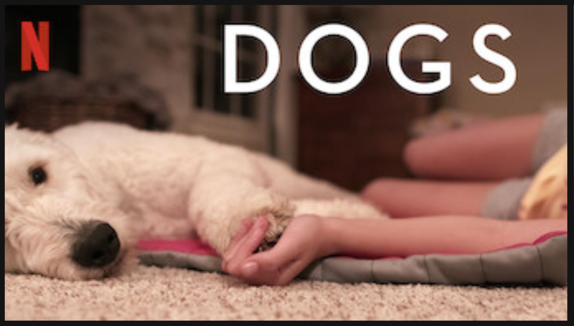 Doppen sparen voor de KNGF Geleidehonden bij Dierenkliniek Tiel-Drumpt