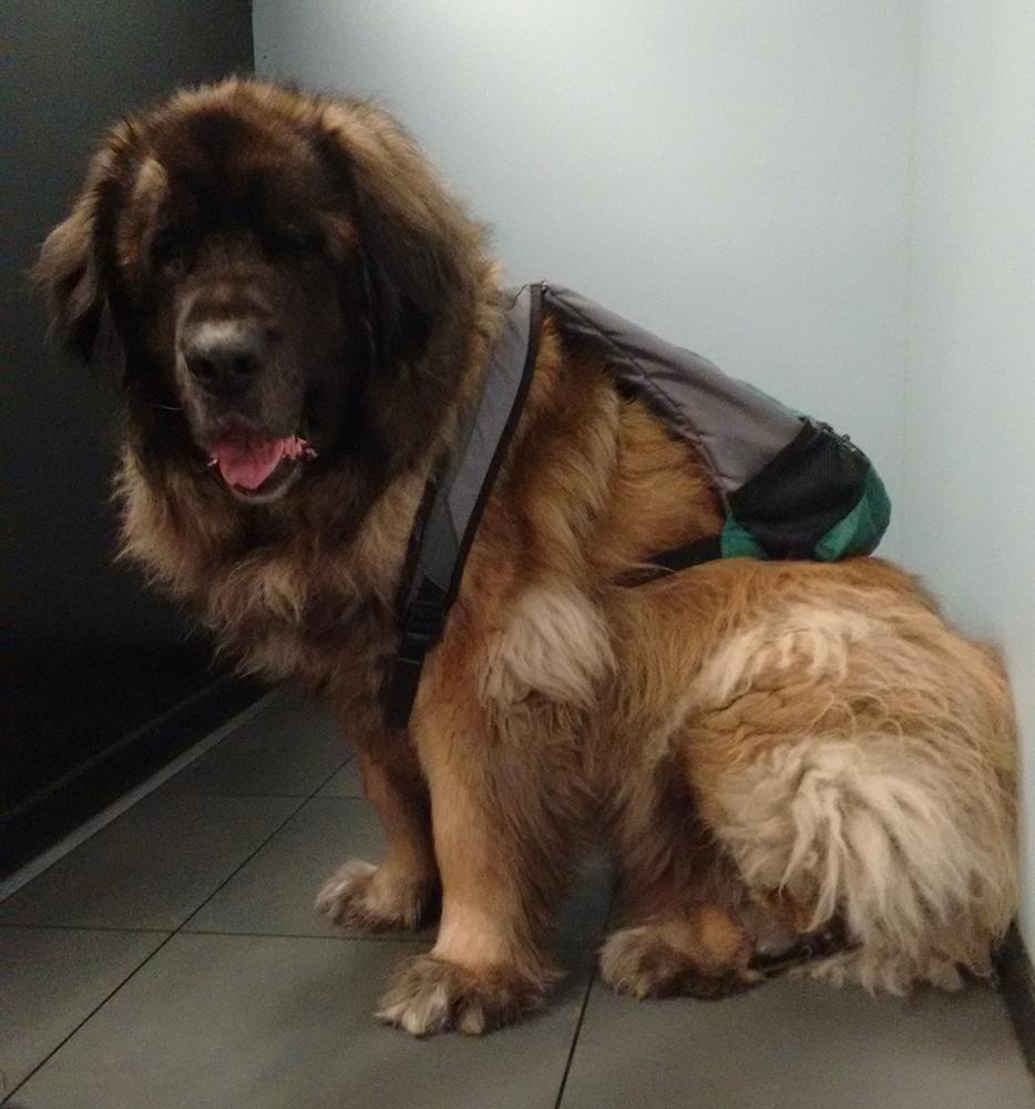 Dierenkliniek Tiel-Drumpt: controleer altijd de invoereisen wanneer u uw huisdier meeneemt naar het buitenland.