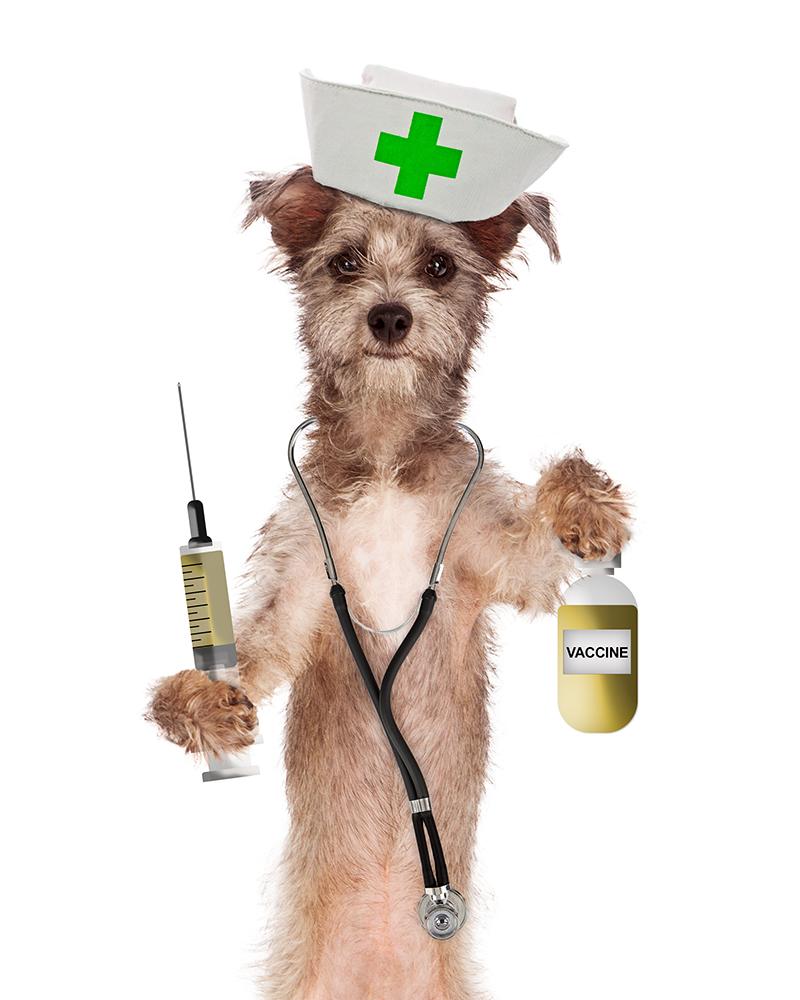 Dierenkliniek Tiel-Drumpt: Het vaccineren van de hond, beschermt tegen veel dodelijke ziekten.