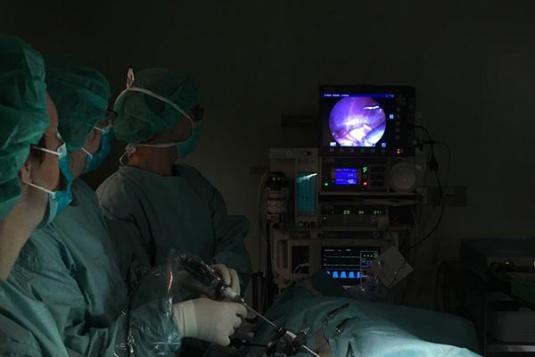 Dierenkliniek Tiel-Drumpt: Het laparoscopisch steriliseren van een hond.