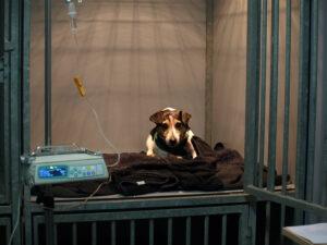 Dierenkliniek Tiel-Drumpt: Er is de mogelijkheid om in de hondenopname infusen toe te dienen.